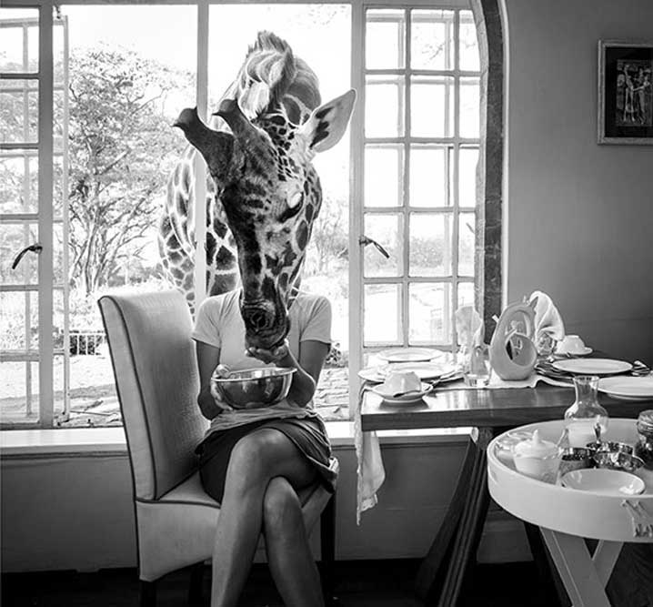 woman at table with giraffe analyzed by Watson image captioning