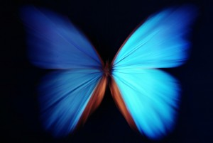 Beautiful butterfly blue abstract with zoom effect - morpho