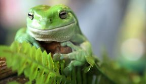 45,000 frog calls and counting