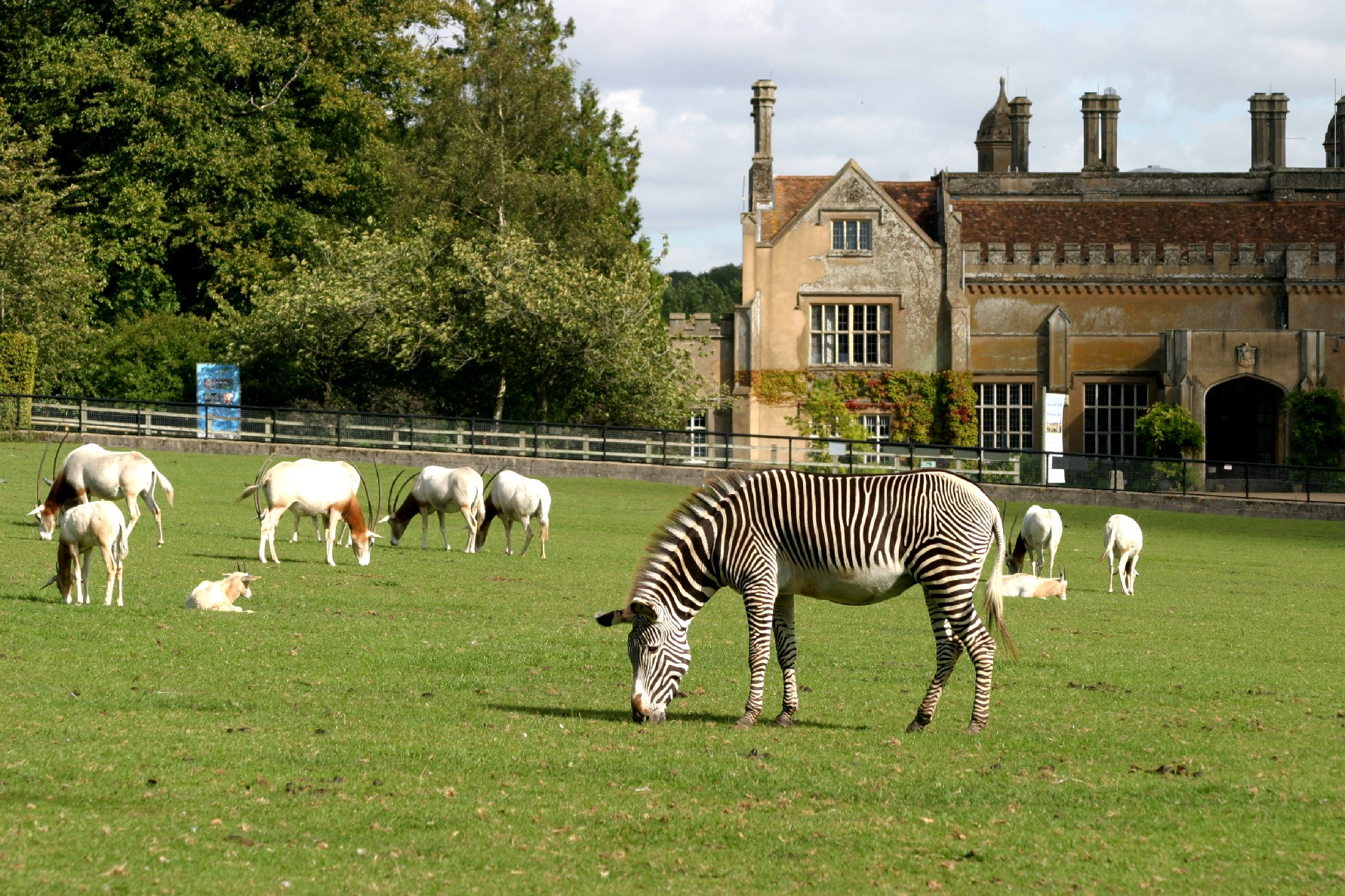 Marwell Hall and animals, courtesy of Marwell Wildlife.