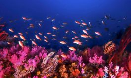 underwater view of coral marine life