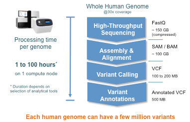 processing time for the whole human genome, Whole Genome Analysis