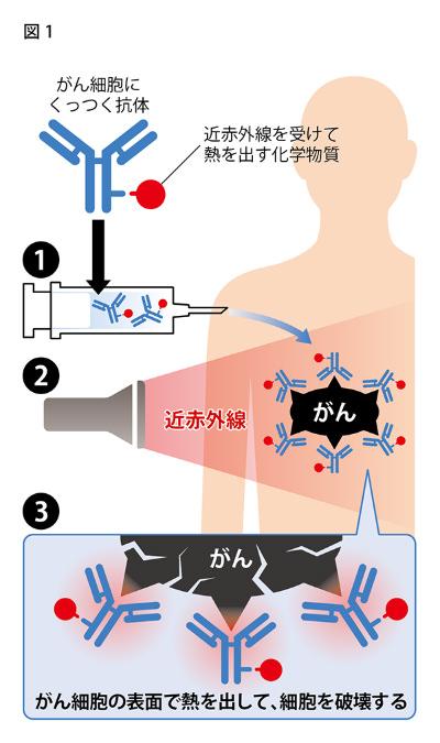 図1:近赤外線を使った新しいがん治療法のイメージ