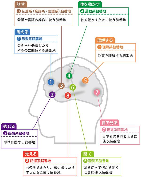 代表的な8種類の脳番地