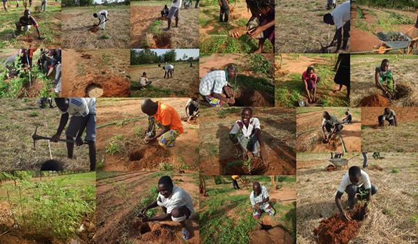 アフリカ・ブルキナファソでの協生農法の実践(2015年)
