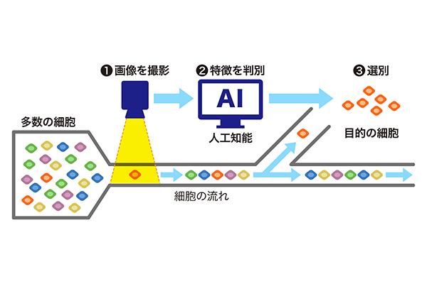 図1:目的の細胞を選ぶセレンディピターのイメージ