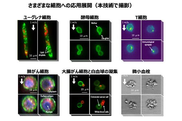 写真1:さまざまな細胞への応用展開