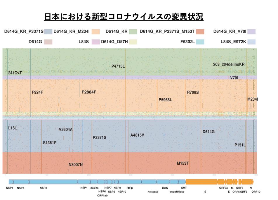 日本における新型コロナウイルスの変異状況