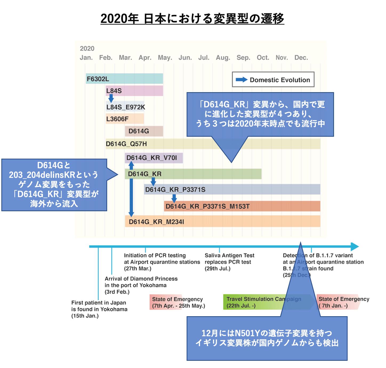 2020年 日本における変異型の遷移