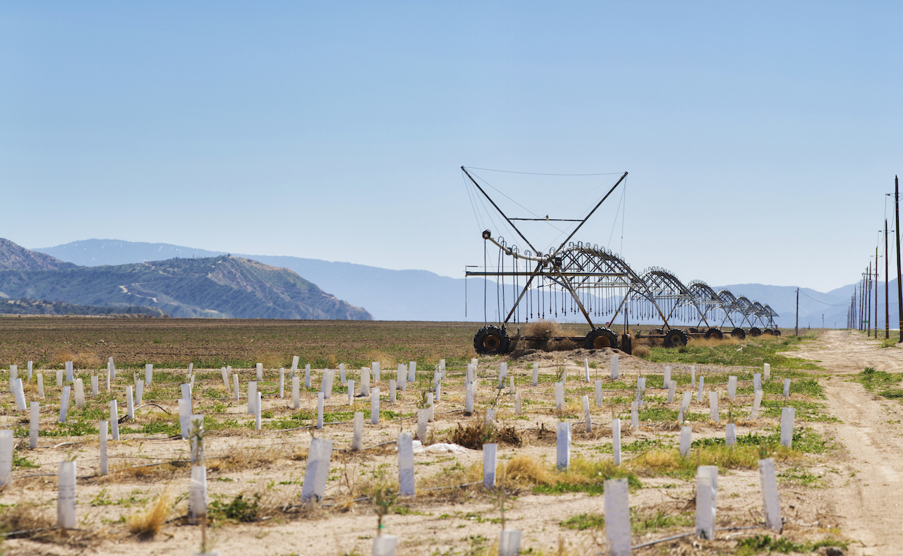 Agricultural wheeled irrigation sprinkling system in California Desert near a dirt road and a newly planted citrus grove.