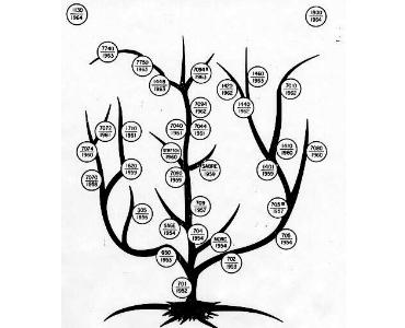 IBM computer family tree
