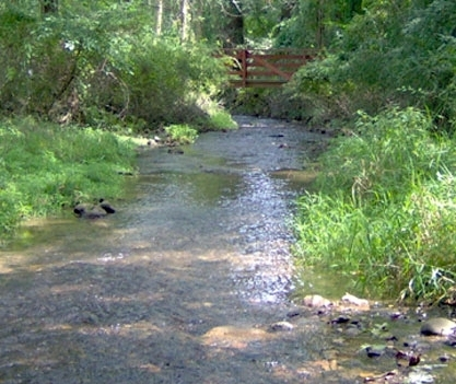 Primrose Creek flowing freely