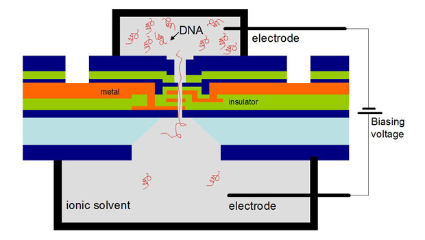 Architecture of the DNA Transistor