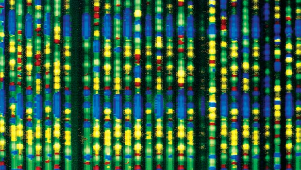 A human genome
