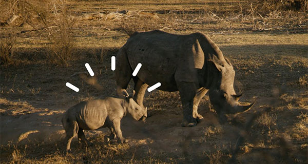 IoT is on the front line in the fight to save South African rhinos