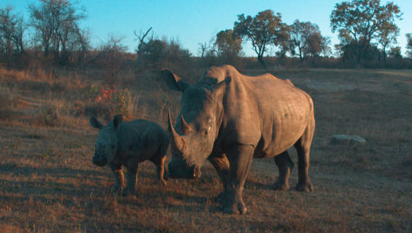 Watson IoT, 코뿔소를 지켜줘요!