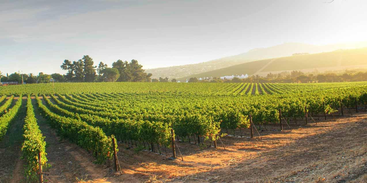 Smarter water, better wine at E. & J. Gallo Winery